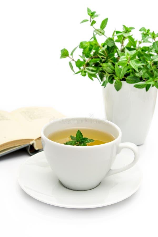 Filiżanka zielona herbata z mennicą, zakończenie, selekcyjna ostrość fotografia royalty free
