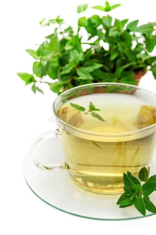 Filiżanka zielona herbata z mennicą, zakończenie, selekcyjna ostrość obrazy royalty free