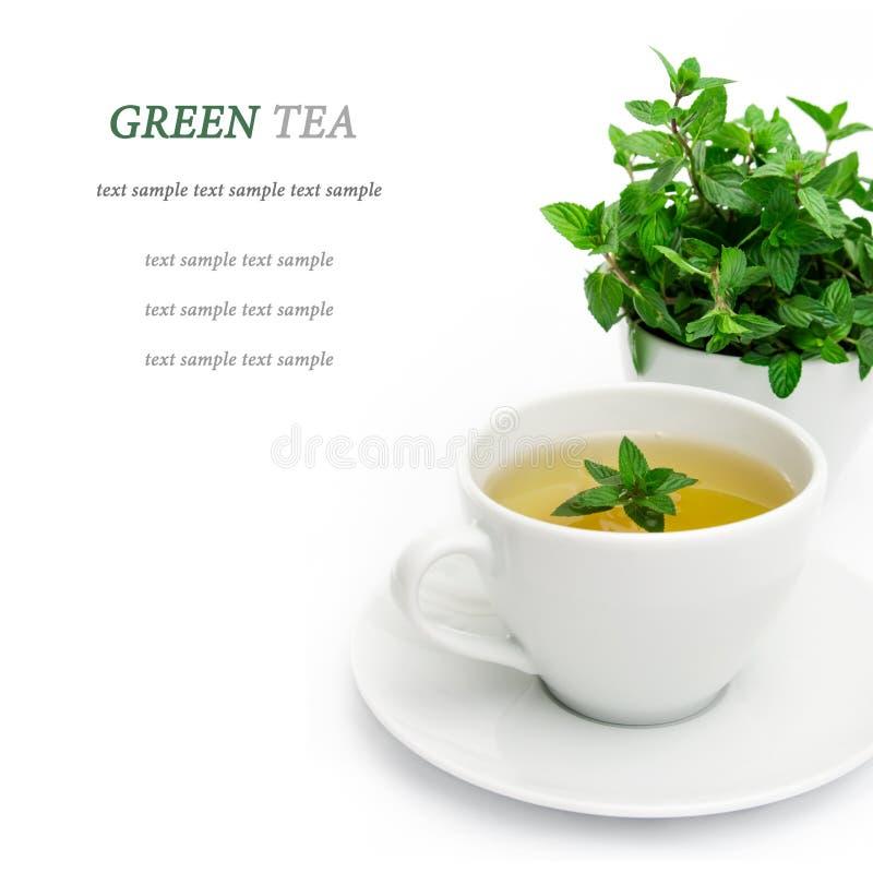 Filiżanka zielona herbata z mennicą, zakończenie, selekcyjna ostrość obraz stock