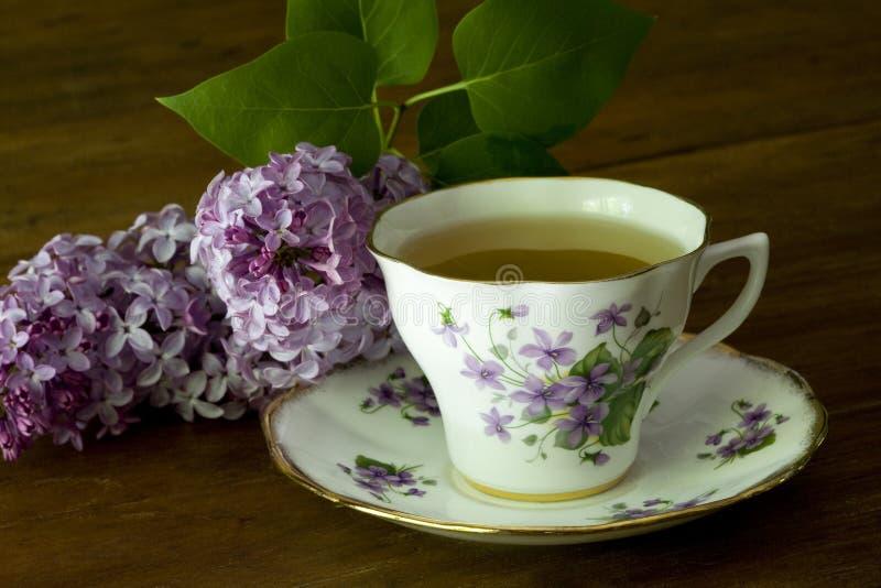 filiżanki bzów wiosna herbata obraz royalty free