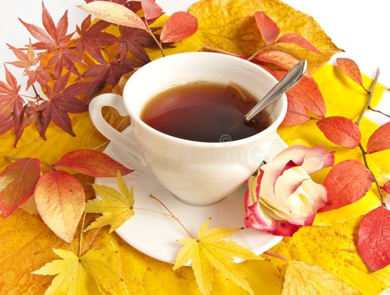 filiżanki spadek herbata fotografia stock