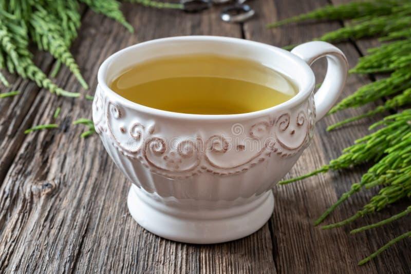 Fili?anka horsetail herbata z ?wie?ym horsetail zdjęcie stock