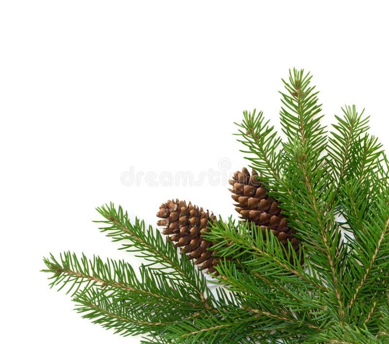 Download Filiais com cones do pinho foto de stock. Imagem de inverno - 16865792