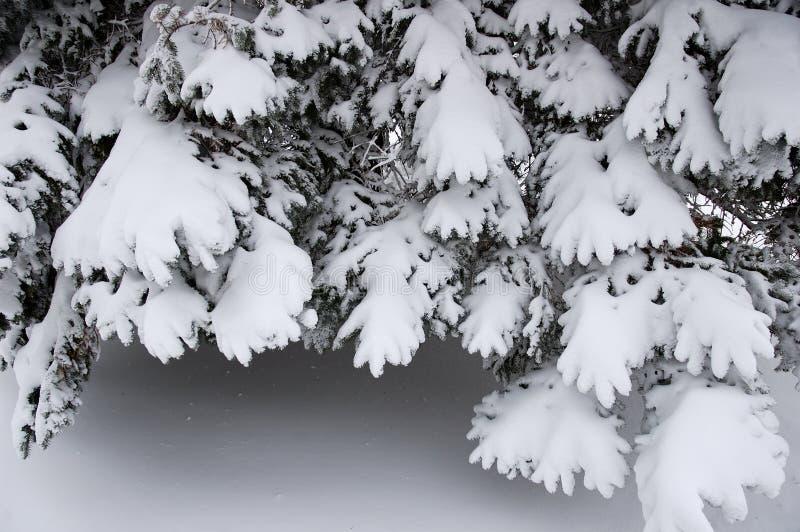 Filiais com neve fotos de stock