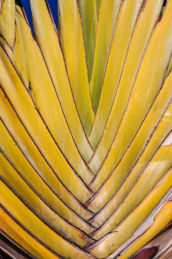 Filiais Da Palmeira Fotografia de Stock