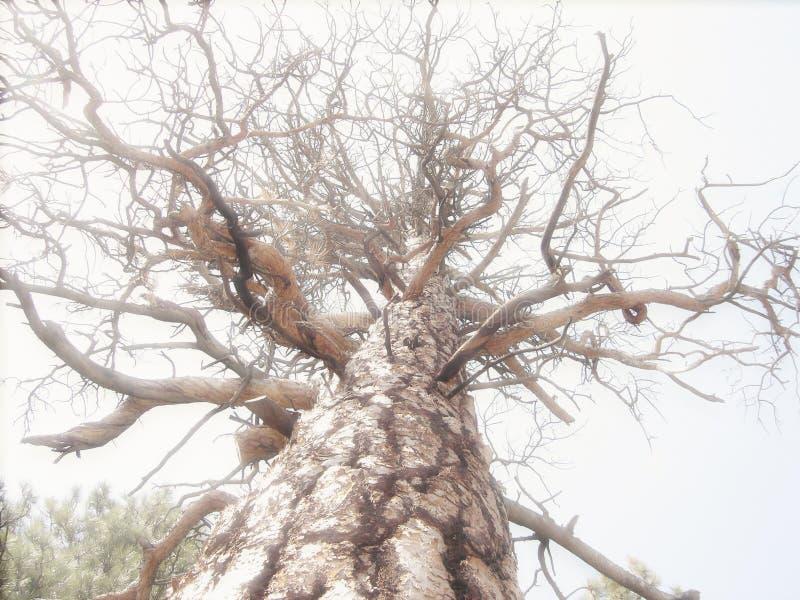 Filiais de árvore imagens de stock