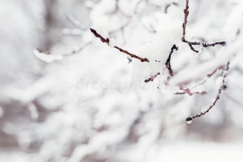 Filiais de árvore cobertas na neve imagens de stock