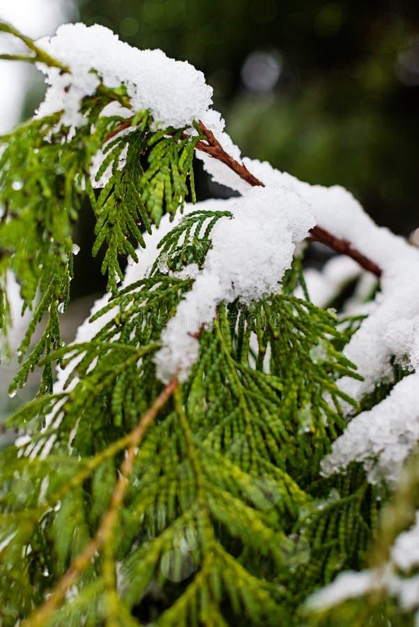 Filiais de árvore cobertas na neve imagens de stock royalty free