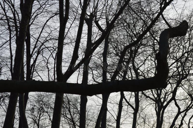 Filiais de árvore com as folhas com nebuloso fotografia de stock