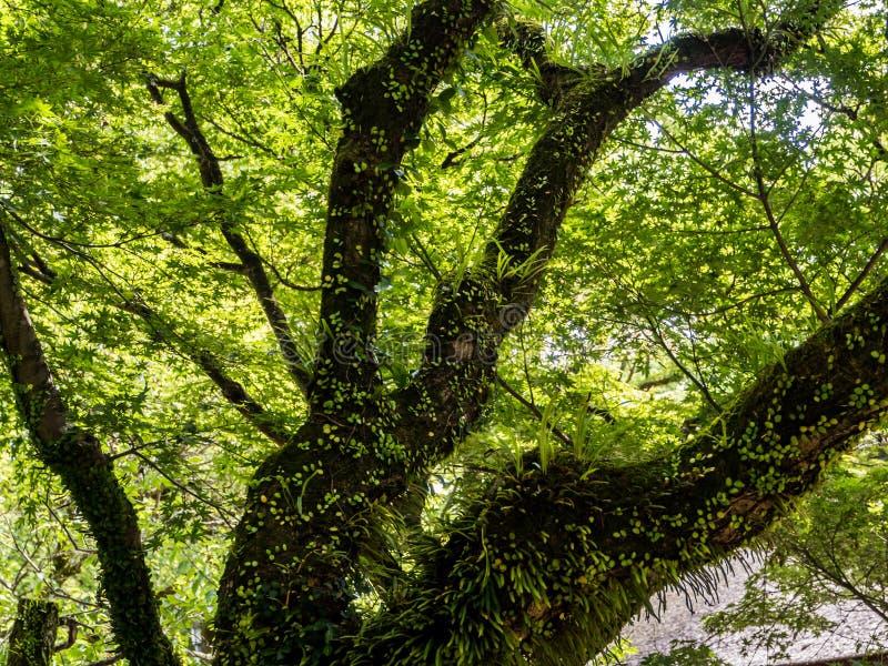Filiais de árvore grandes fotos de stock