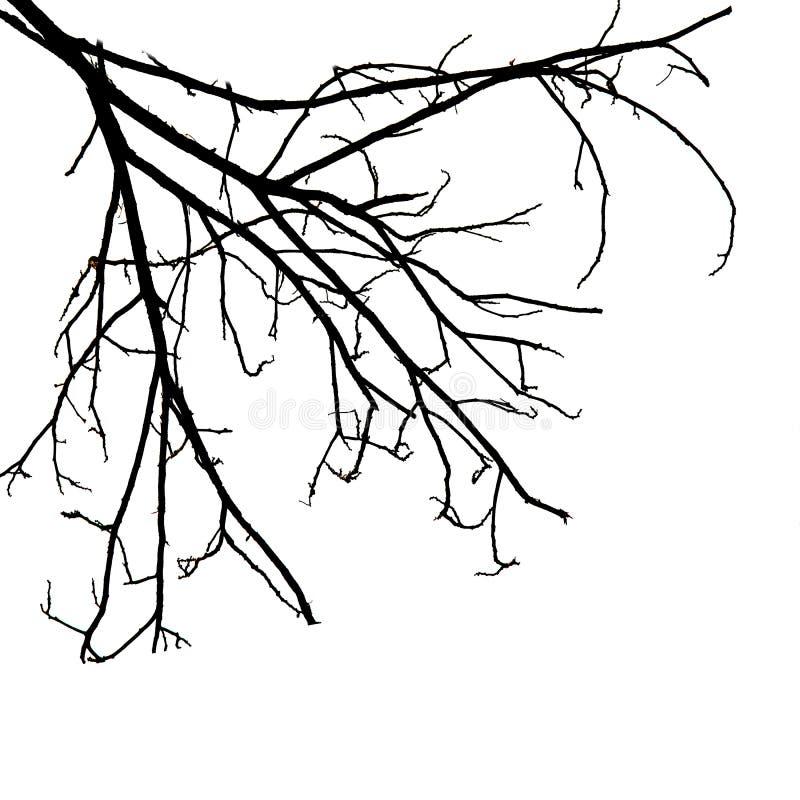 Filiais de árvore isoladas no fundo branco ilustração stock