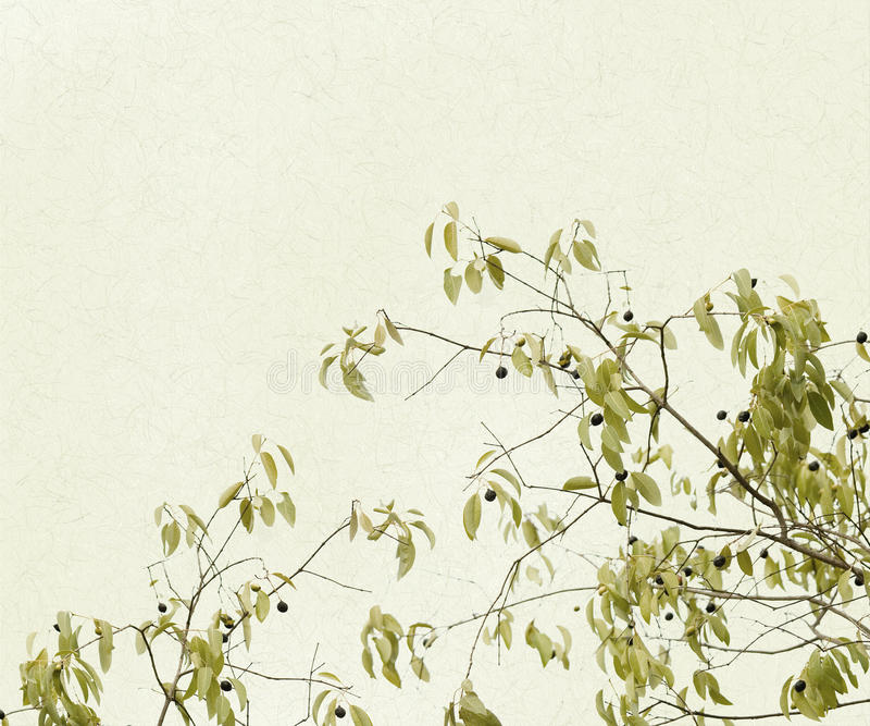 Filiais delicadas das folhas e das bagas ilustração royalty free