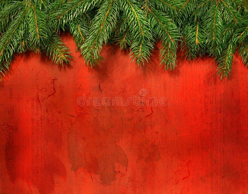 Filiais do pinho de encontro à madeira vermelha rústica fotografia de stock