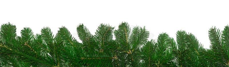 Filiais verdes frescas do abeto imagem de stock royalty free