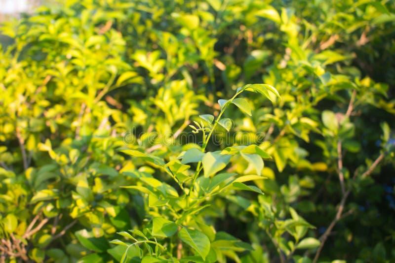 Filial av den gröna tropiska växten på solig dag royaltyfria bilder
