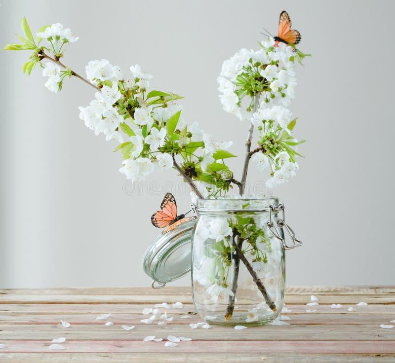 Filial av den körsbärsröda blomningen med fjärilar i den glass kruset på trä fotografering för bildbyråer