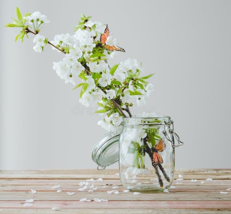 Filial av den körsbärsröda blomningen med fjärilar i den glass kruset på trä royaltyfri fotografi