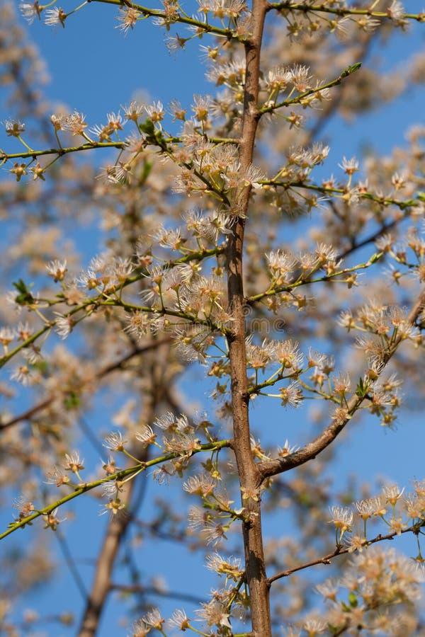 Filial av en glad blomning royaltyfri fotografi