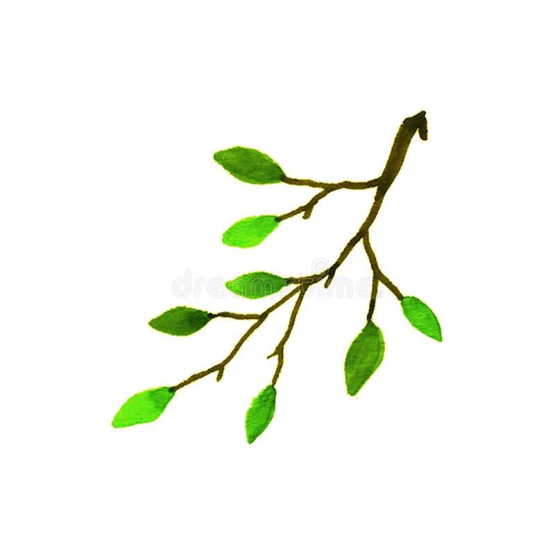 Filial av ett lövfällande träd vattenfärg arkivfoton