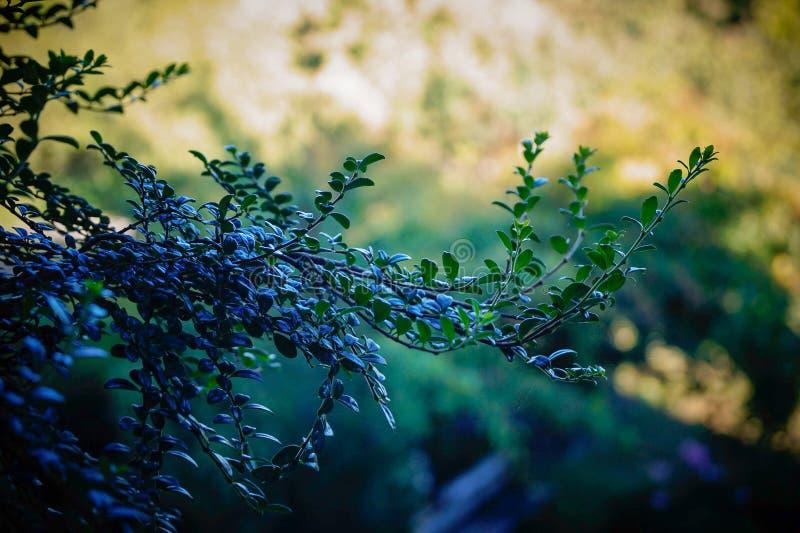 Filial av ett träd med gräsplan- och blåttsignaler royaltyfri foto
