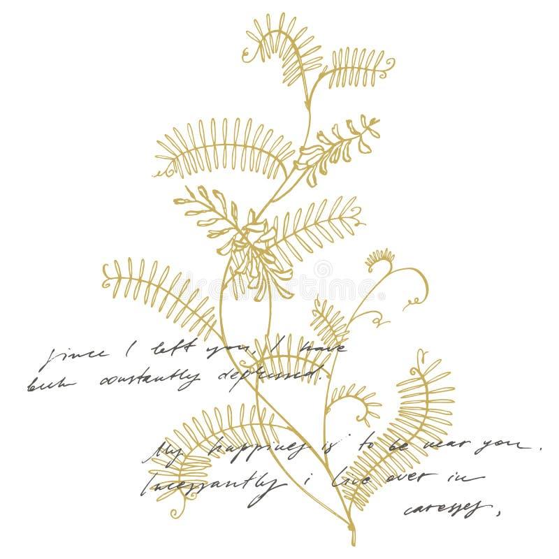 Filial av Viciacraccaen för lös växt Craccaen för Tufted vicker eller Vicia, tappning inristade illustrationen Botanisk illustrat royaltyfri illustrationer