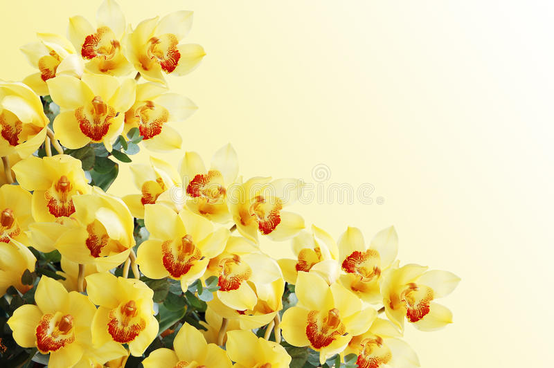 Filial bonita de uma orquídea fresca fotos de stock