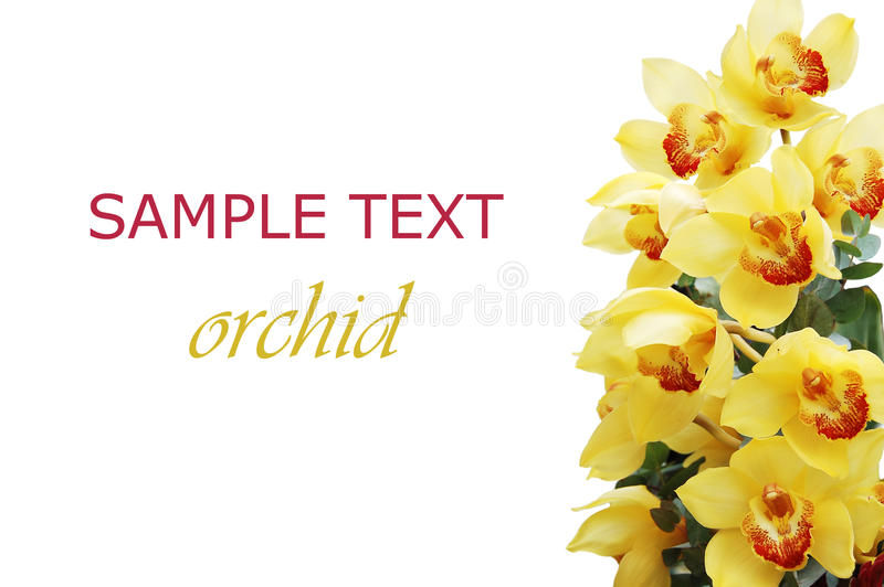 Filial bonita de uma orquídea fresca foto de stock royalty free