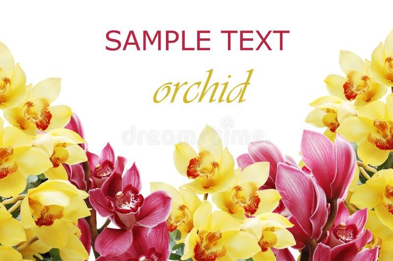 Filial bonita de uma orquídea fresca fotografia de stock royalty free