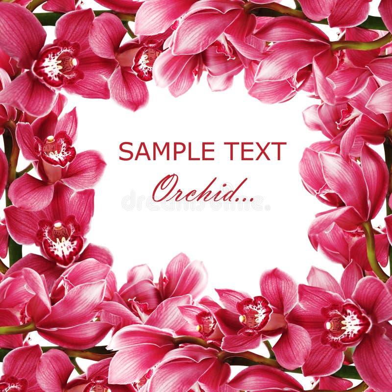 Filial bonita de uma orquídea fresca imagem de stock royalty free