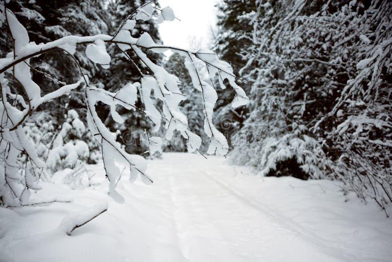 Filial coberta com a neve imagem de stock