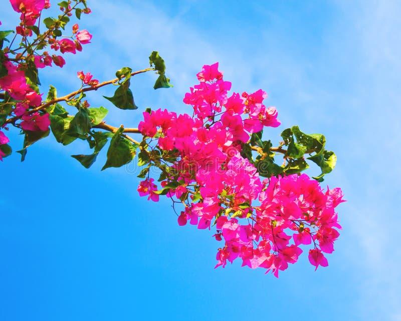 Filial completamente das flores imagens de stock royalty free