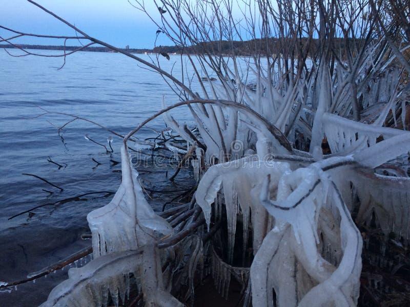 Filial congelada imagens de stock