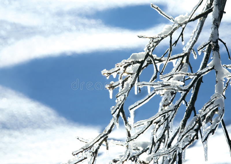 Download Filial congelada imagem de stock. Imagem de filial, closeup - 12802121