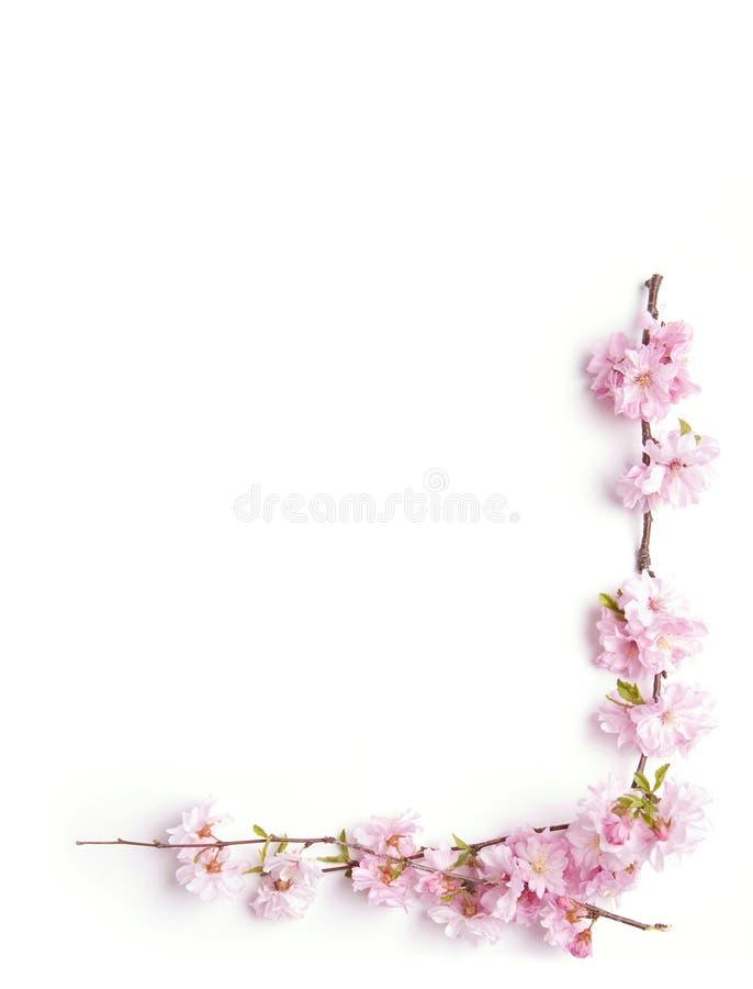 Filial cor-de-rosa fotografia de stock