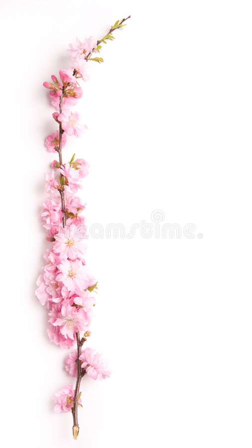 Filial cor-de-rosa foto de stock