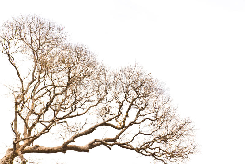 Filial da árvore inoperante imagem de stock royalty free
