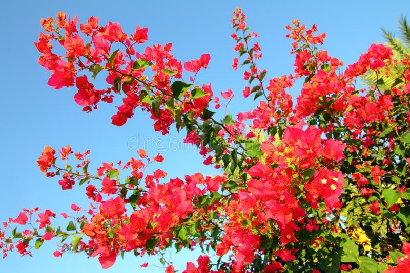Filial da flor com flores cor-de-rosa fotos de stock