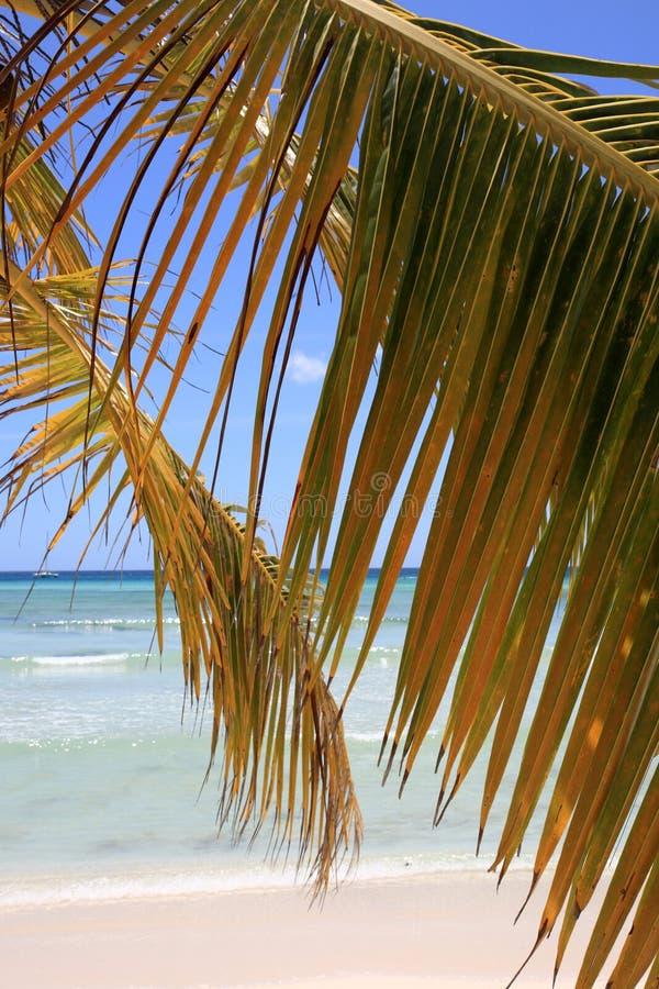 Filial da palma na praia imagens de stock royalty free