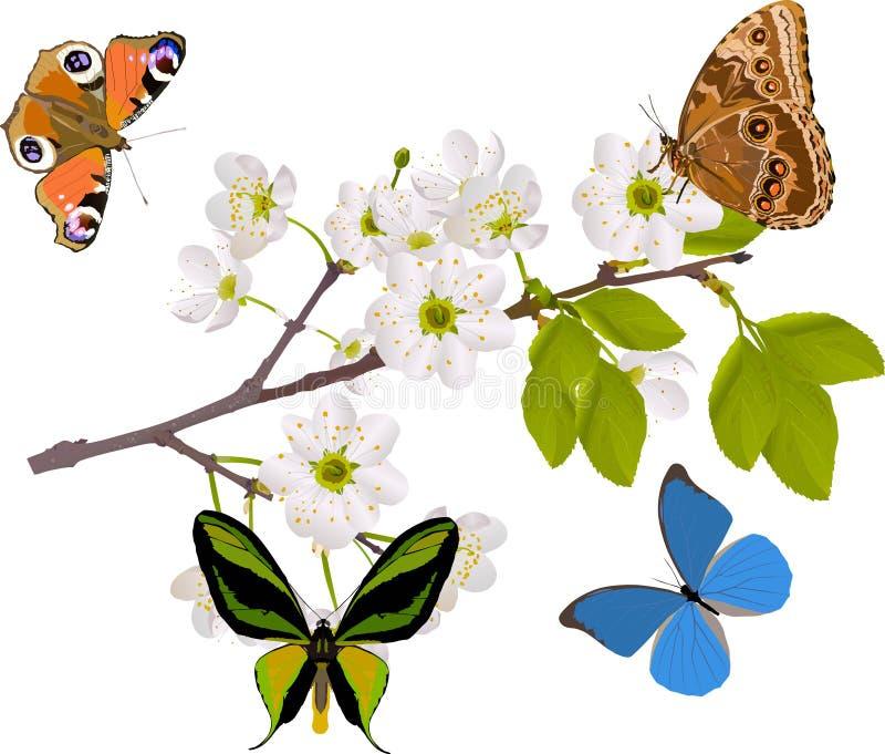 Filial de árvore da cereja com as quatro borboletas grandes ilustração do vetor