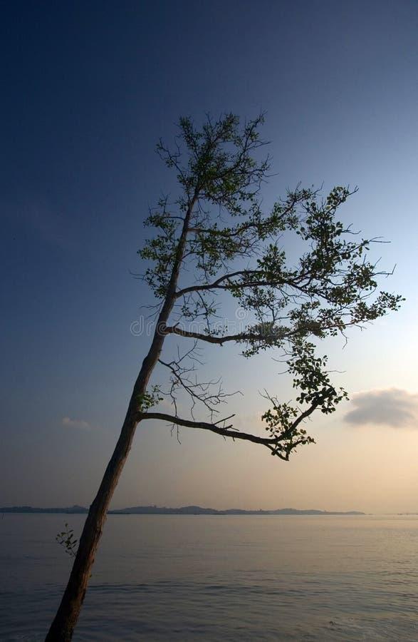 Filial de árvore que alcanga para fora fotos de stock