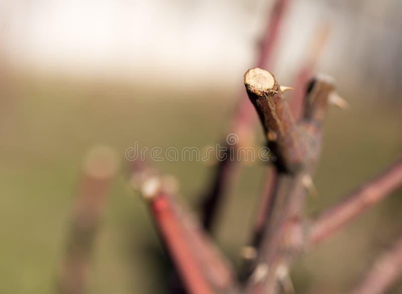 Filial de árvore seca fotos de stock