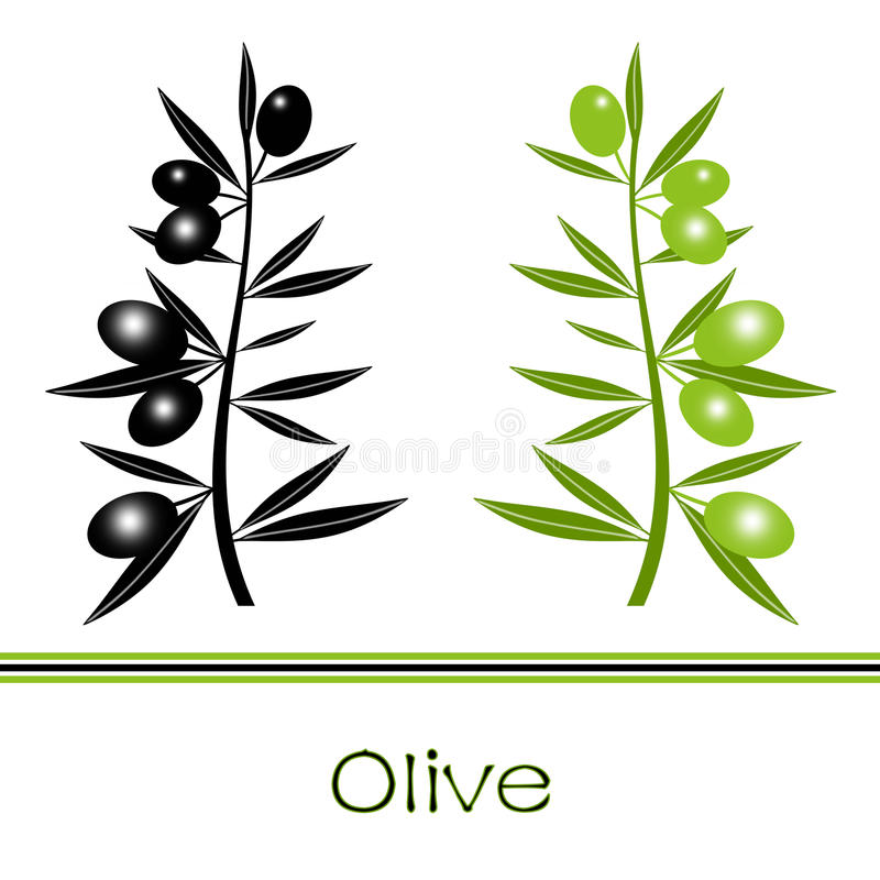 Filial de azeitonas pretas e verdes ilustração stock