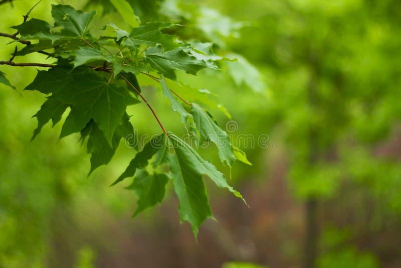 Filial de uma árvore na floresta foto de stock royalty free