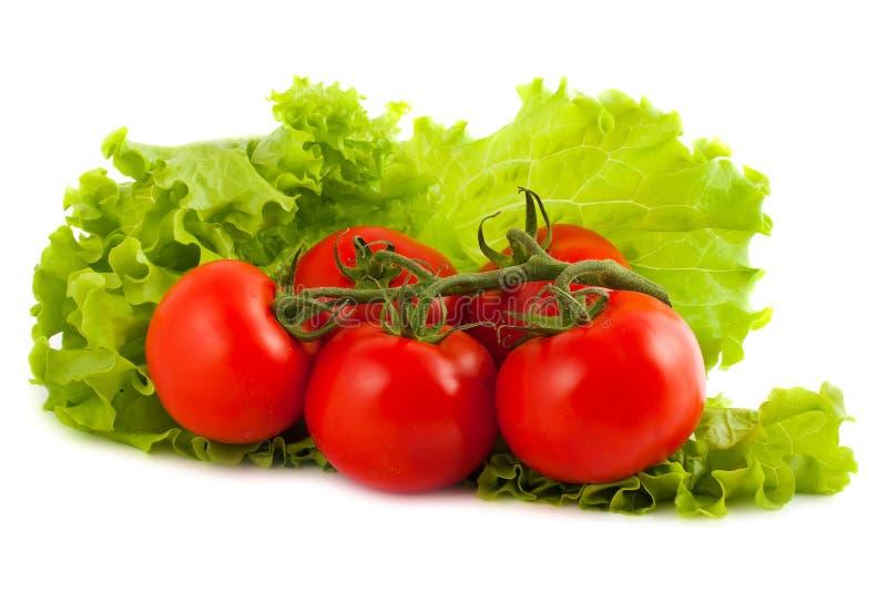 Filial dos tomates na folha da salada imagem de stock royalty free
