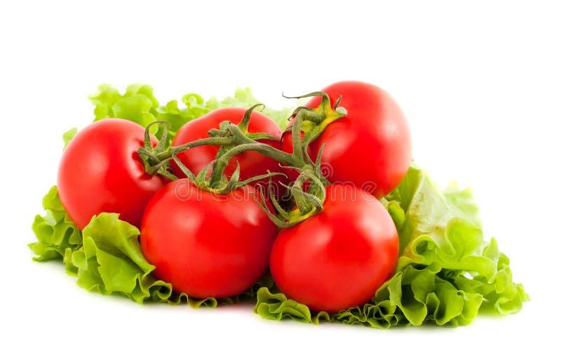 Filial dos tomates na folha da salada imagem de stock