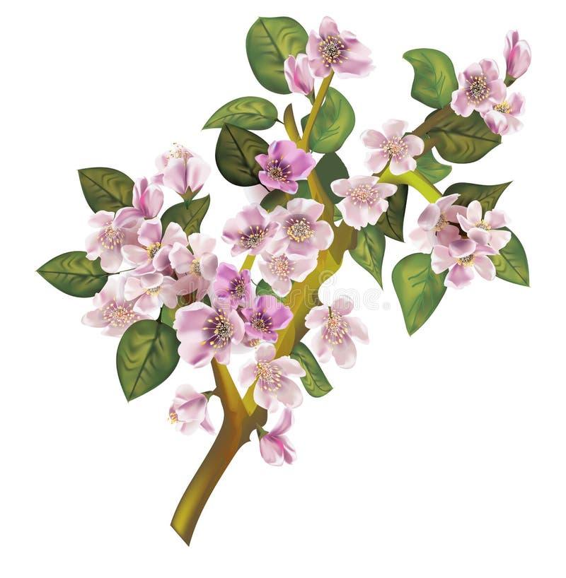 Filial för blomningäppleträd stock illustrationer