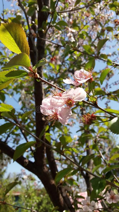 Filial för solig dag och blomning royaltyfri bild