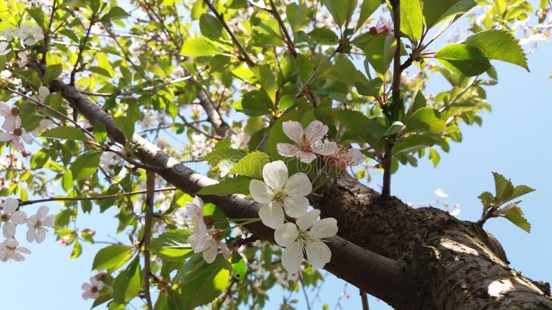 Filial för solig dag och blomning arkivbilder