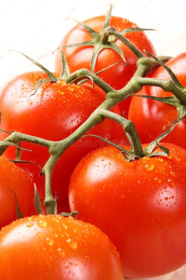 Filial madura do tomate imagem de stock