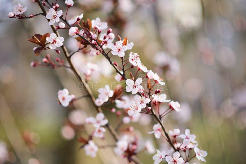 Filial med blommor fotografering för bildbyråer